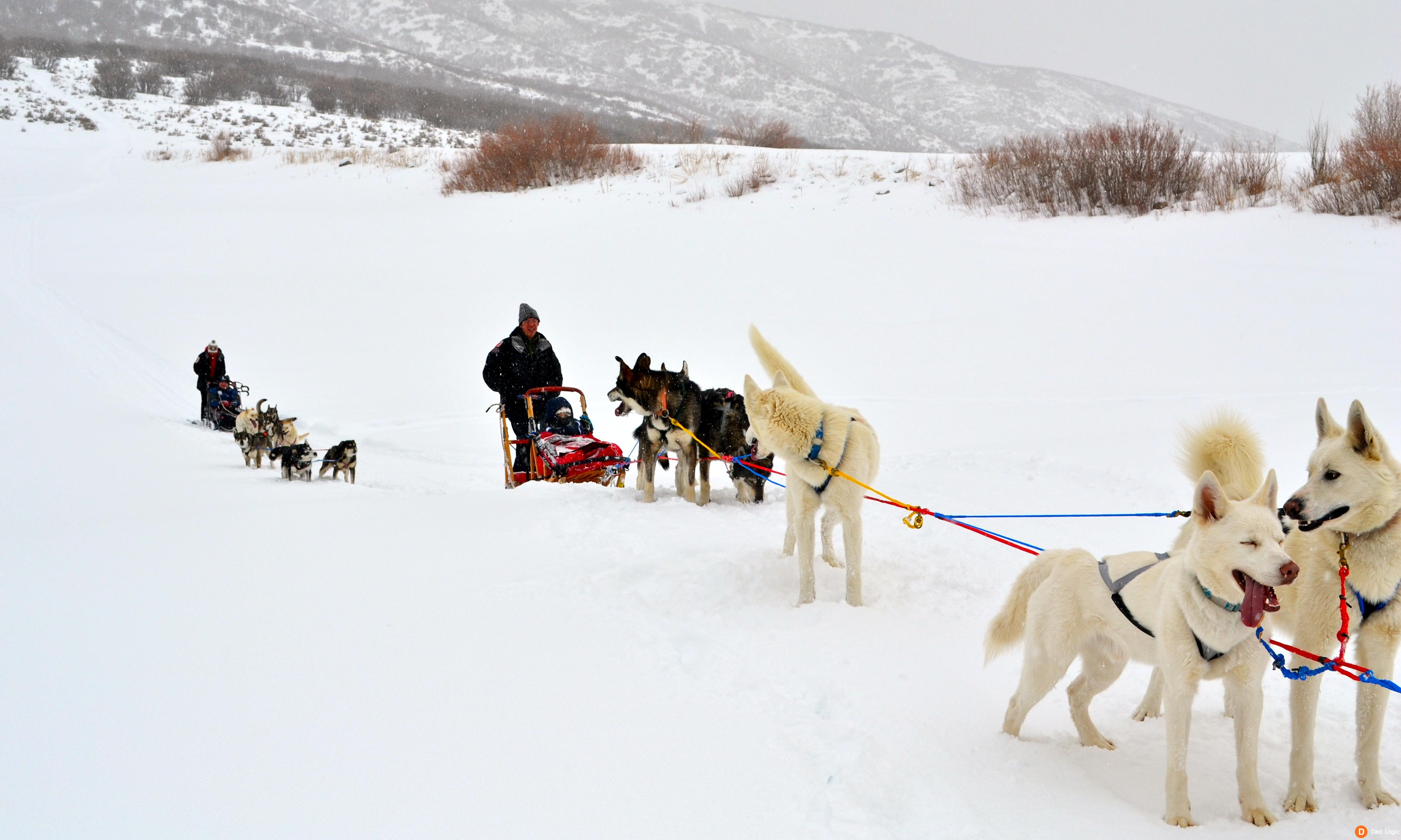 Dog Sledding in Park City Utah is an Adventure of a ...