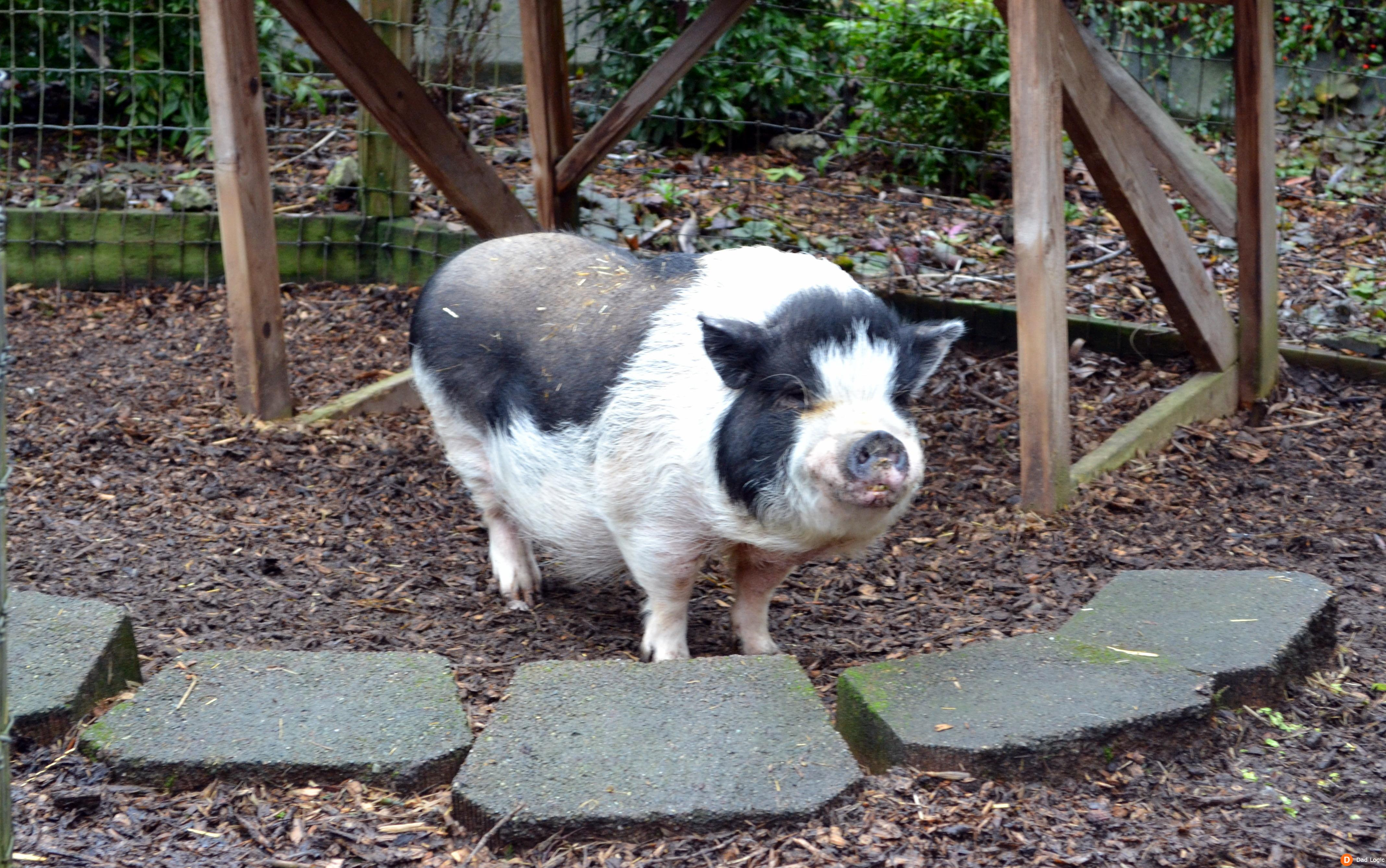 Image result for willow lodge seattle pig